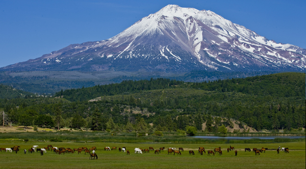 Sabankaya Mares in pasture below snow-capped Mt. Shasta and lake